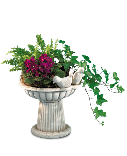 Bird Bath Planter U S Retail Flowers Flowers Plants And Gifts